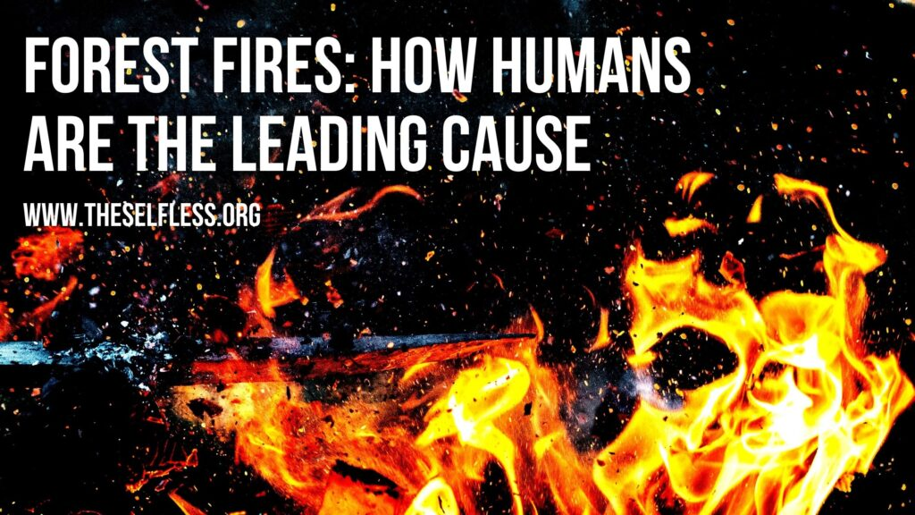 Forest Fires and Humans